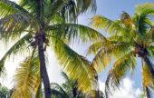 Défiscalisation outre-mer : la loi Girardin c'est fini, mais la loi Pinel a de nombreux atouts